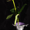 Single Red Rose In Vase by Wesley Farnsworth