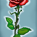 Single Red Rose by Kevin Middleton