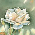 Single  White Rose by Arline Wagner