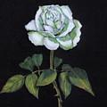 Single White Rose by Joyce Geleynse