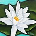 Single White Water Lily by Lorraine Klotz