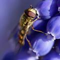 Sipping Nectar by Raelene Goddard