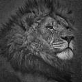 Sir Lion by Ernie Echols