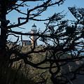 Sitka Spruce Silhouette by Robert Potts