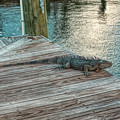 Sitting On The Dock by John M Bailey