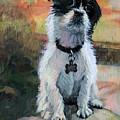 Sitting Pretty - Black And White Puppy by Bonnie Mason