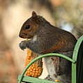 Sitting Squirrel by Travis Rogers