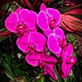 Six Flowers by Ronald Watkins