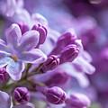 Six Petals Double Happiness by Jenny Rainbow