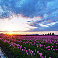 Skagit Floral Sunset by Mike Reid