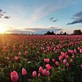 Skagit Sunset Field by Mike Reid