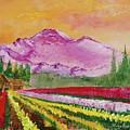 Skagit Tulip Fields by Sherry Shipley