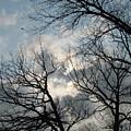 Skeleton Trees 1 by Anita Burgermeister