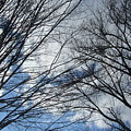 Skeleton Trees 4 by Anita Burgermeister