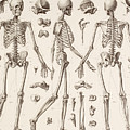 Skeletons by English School