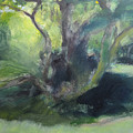 Sketch Of A Shady Glade. by Harry Robertson