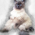 Sketch Of Regal Himalayan Cat - Not by Elaine Plesser