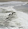 Skimmer And Waves by William Tasker