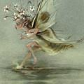 Skimmer by Patrick McClintock