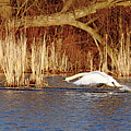 Skimming The Water I by Debbie Oppermann