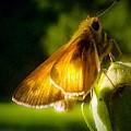 Skipper Butterfly Basking In Sun by Debra Lynch