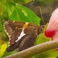 Skipper Trying To Hide Behind A Flower by Debra Lynch