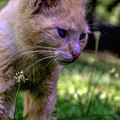 Skippy Feral Cat Portrait 0369b by Ricardos Creations