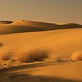 Skn 1124 Desert Landscape by Sunil Kapadia