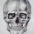 Skull by Aleksandra Savova