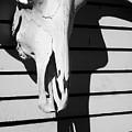 Skull And Shadow by David Gordon