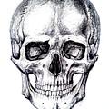 Skull Drawing by Aleksandra Savova