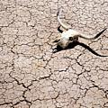 Skull In Desert 2 by Kelley King