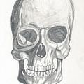 Skull Study 2 by Reed Novotny