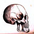 Skull Study 4 by Reed Novotny