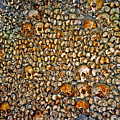 Skulls And Bones Under Paris by Juergen Weiss