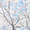 Sky Full Of Blossoms by Bobbi Jo Beaver