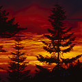 Sky Of Fire by Soli Deo Gloria Wilderness And Wildlife Photography