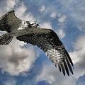 Sky Pilot by Steve McKinzie