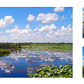 Skyscape Reflections Blue Cypress Marsh Florida Collage 1 by Ricardos Creations