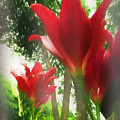 Skyward Red Lilies by Marty Malliton