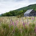 Slate Cabin In Wales by Sher Stoll