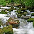 Slate Creek, Nez Perce National Forest, Idaho by Robert Mutch