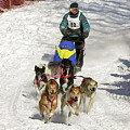 Sled Dogs In Action by Maureen Beaudet