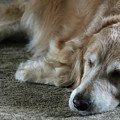 Sleeping Golden by Veronica Batterson