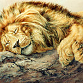 Sleeping Lion by Kathleen V  Butts
