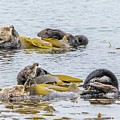 Sleeping Otters by Eric Strickland