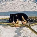 Sleeping Puppy by Juergen Weiss