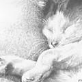 Sleeping Sadie by Meagan  Visser
