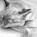 Sleeping Siamese by Elizabeth Gyles Johnson