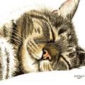 Sleeping Tabby Cat  by Mary-Anne Harding